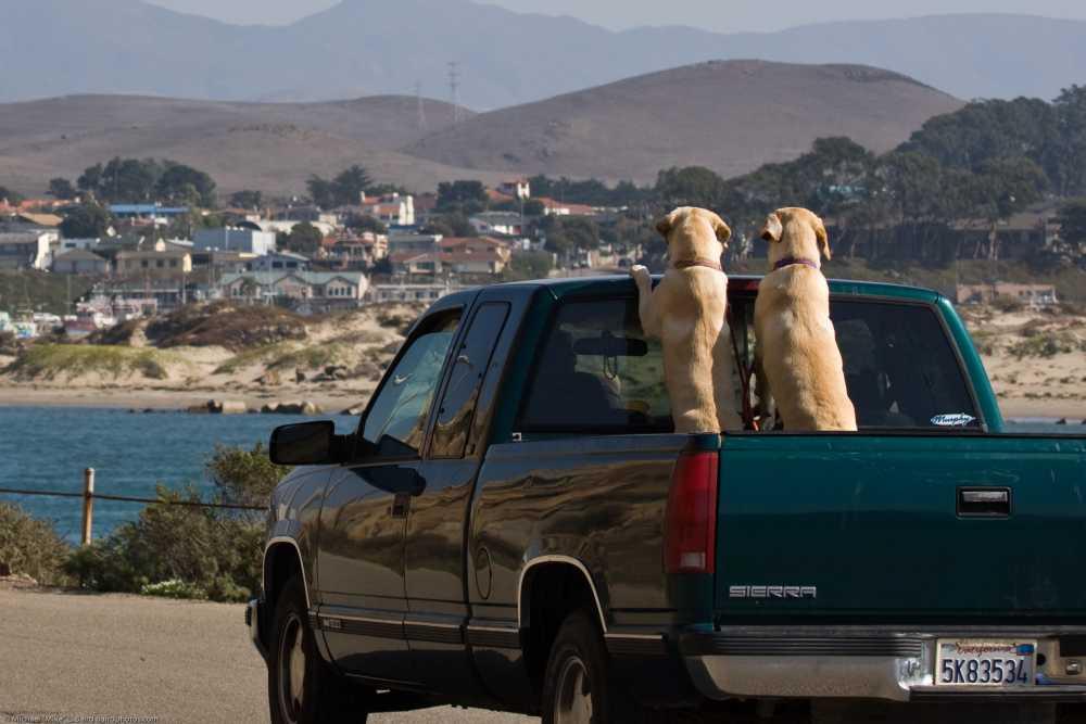 Mitfahrgelegenheit für Tiere - Hunde auf Auto