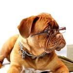 Ein Hund mit Brille liegt auf einem offenen Buch.