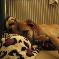 Suche Mitfahrgelegenheit für mich und meinen Hund